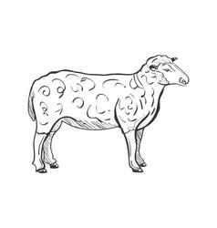 Doodle sheep vector