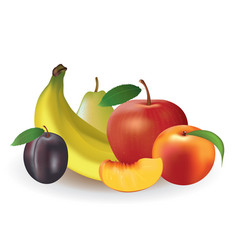 fruits on white background vector image
