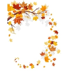 Maple leaves swirl vector image