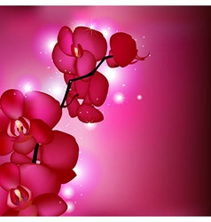 Pink Orchids vector image