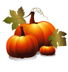 three pumpkin vector image