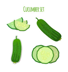cucumber set made in cartoon flat style vector image