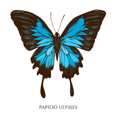 Set hand drawn colored papilio ulysses vector