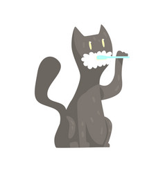 cute cartoon grey cat brushing teeth with tooth vector image