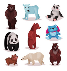 different species of bears set wild bears and vector image