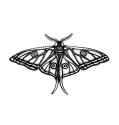 high detailed spanish moon moth graellsia isabe vector image