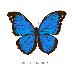 Set hand drawn colored morpho menelaus vector