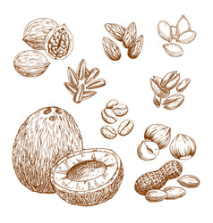 Sketch icons of nuts grain and seeds vector