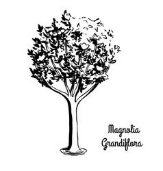 Sketch magnolia vector