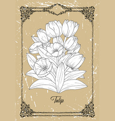 Black and white drawing tulip vector