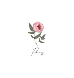 delicate peony branch flower cute hand drawn vector image