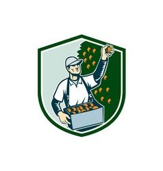 Fruit Picker Worker Picking Plum Shield vector