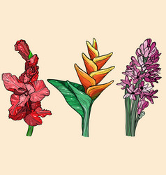 Gladiolus hyacinth and bird of paradise flower vector