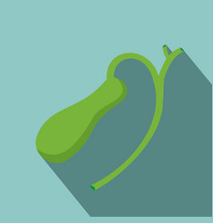 human gallbladder anatomy with shadow vector image