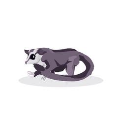 raccoon icon cartoon endangered wild australian vector image
