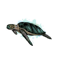 sea turtle from a splash watercolor colored vector image