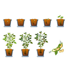 Soy beans seed sprout in pot icons set flat style vector