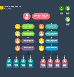 business organizational structure vector image