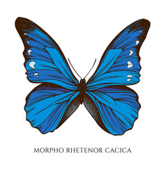 Set hand drawn colored morpho rhetenor vector