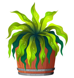 a green plant in pot vector image