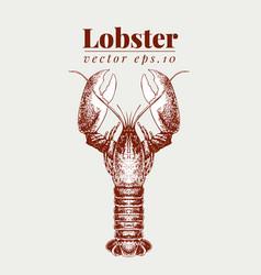 Seafood lobster retro vector