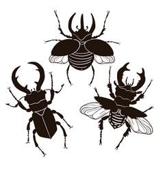 set stag beetle and rhinoceros beetle isolate vector image