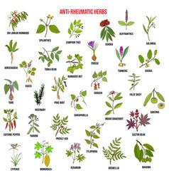 Best anti-rheumatic herbs natural botanical set vector