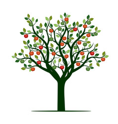 Color tree with leaves and apples vector