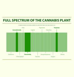 full spectrum cannabis plant horizontal vector image