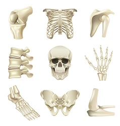 Human bones icons set vector