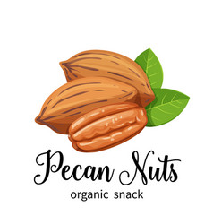 Pecan nuts in cartoon style vector