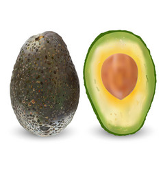 ripe brown avocado isolated vector image