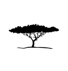 Silhouette acacia tree vector