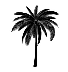 Palm silhouette vector