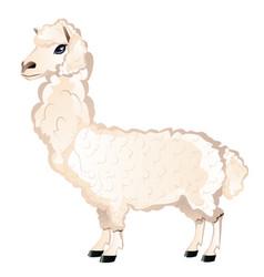 Cartoon furry alpaca vector