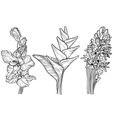 Flowers sketch set vector