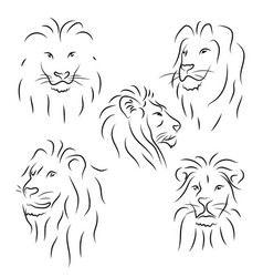 set of black line lions on white background vector image