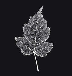 skeletonized leaf of a bush on a black vector image