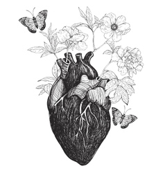Human anatomical heart whith flowers vector image