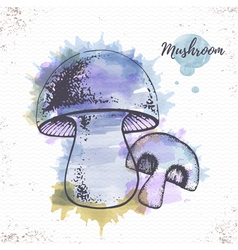 Watercolor mushroom sketch vector image