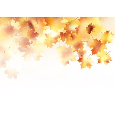 Beautiful autumn with maple leaves plus EPS10 vector image