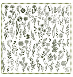 collection hand drawn flowers and herbs vector image
