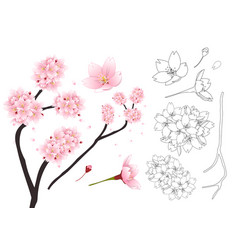 Sakura cherry blossom flower outline vector