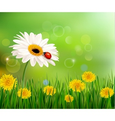 Summer nature background with ladybug on white vector