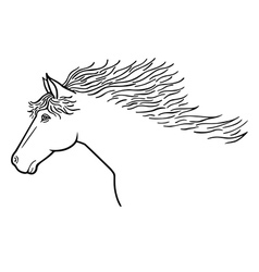 horse line drawing vector image vector image