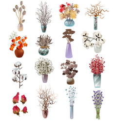 Collection of dry flowers bouquets in vases vector