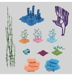 Elements of reef algae corals and sea flowers vector