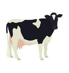 Holstein friesian cow breeds domestic cattle vector