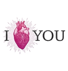 I Love You with human anatomical heart vector image