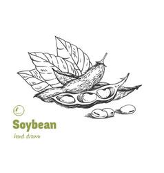 Soybean hand drawn set vector
